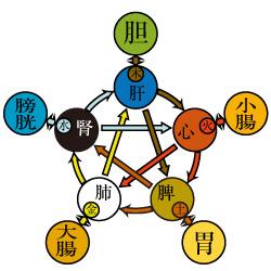 中医学とは|かっさの教育・資格...
